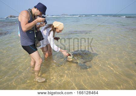 HIKKADUWA, SRI LANKA - MARCH 23, 2015: Tourists feed a giant sea turtle on the sandy shallows. Hikkaduwa, Sri Lanka