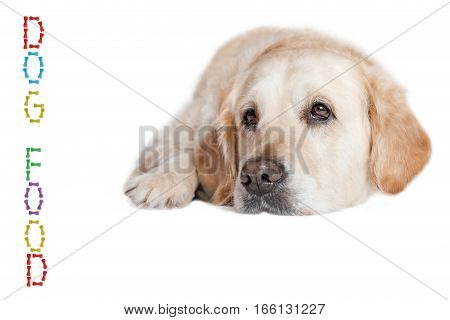Closeup view of the Golden Retriever Dog lying on the white background. Vertical inscription DOG FOOD made from colored dog bones is in the left side of the photo.