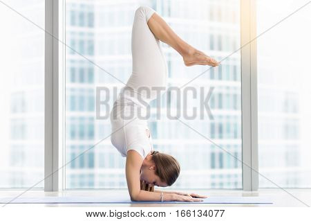 Young attractive woman practicing yoga, standing in Pincha Mayurasana exercise, handstand pose, working out, wearing sportswear, white t-shirt, pants, indoor full length, near floor window, horizontal
