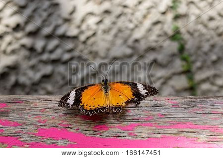 Big wounded butterfly resting on wooden bench