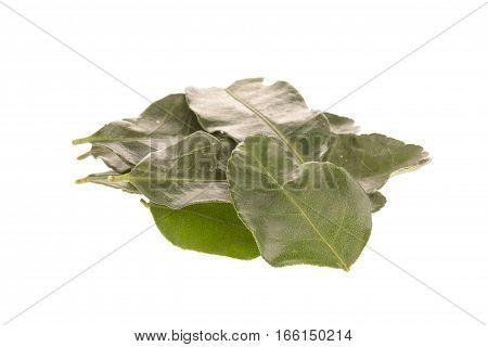 Kaffir Lime Leaves View