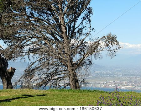 Huge Tree In Fore Ground, With Sea And Mountainous Back Ground