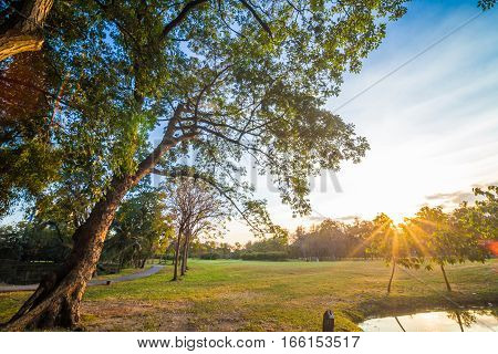 Sunset At Public Park With Light Beam On Tree And Meadow