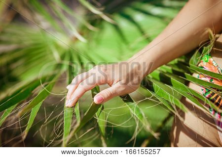 close-up of female hand is touching a palm branch. tropical background