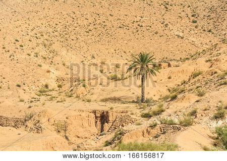 Image of typical desert landscape with date palms