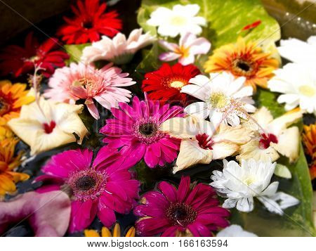 Beautiful colored flowers in a flowerpot, summertime