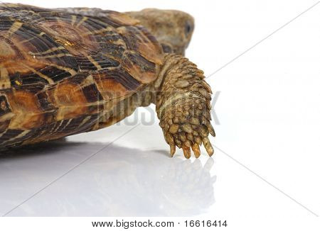 Macro of a turtle leg from behind
