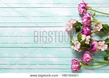 Border from spring tulips flowers and apple tree flowers on turquoise painted wooden background. Selective focus. Place for text.