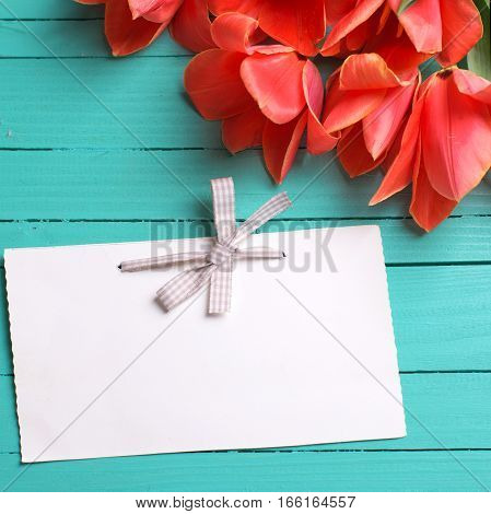Fresh coral tulips and empty tag on teal painted wooden background. Selective focus. Place for text. Square image.