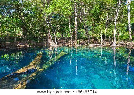 Still Lake In Dark Forest, Dominican Republic