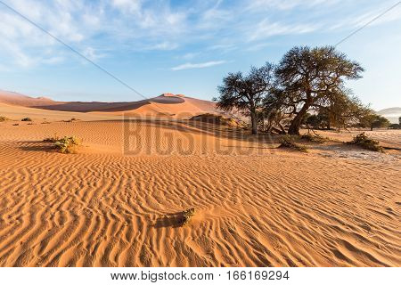 The scenic Sossusvlei and Deadvlei clay and salt pan with braided Acacia trees surrounded by majestic sand dunes. Namib Naukluft National Park main visitor attraction and travel destination in Namibia. poster
