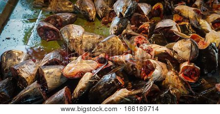 Carcasses of cat fish head at ground floor of traditional market photo taken in Jakarta Indonesia java