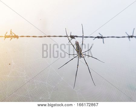 Spider on the web near barbed wire fence in the morning