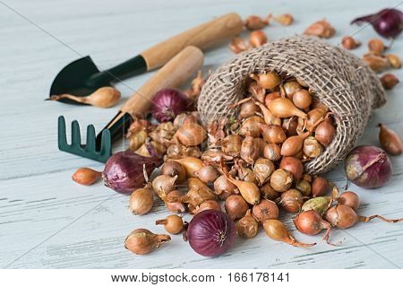 A bag with small onions for planting, rake and shovel on a light wooden background.