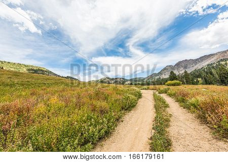 Albion Basin landscape with trail and alpine meadows in summer.