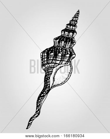 Hightly detailed vector monochrome illustration of sea shell