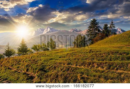Spruce Forest On Grassy Hillside In Tatras At Sunset
