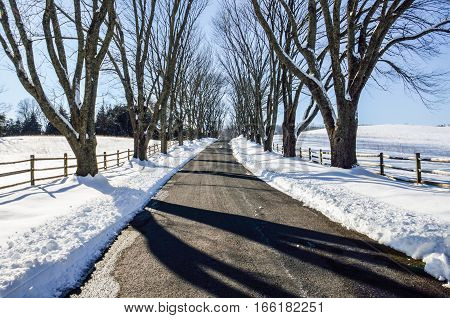 A road leading to Ash Lawn-Highland Home of President James Monroe located in Albemarle County Virginia.