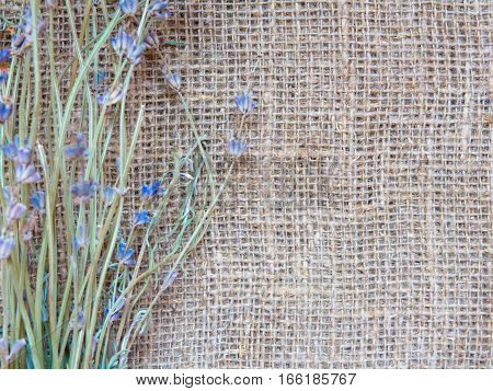 Natural background old vintage rustic old style of eco material with lavender