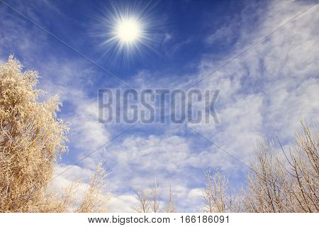 Winter Blue Sky, Bright Sun, Snow-covered Tree Branches On A Background Of Clouds