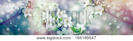 Beautiful flowering, blooming fruit tree - spring surrounds Us and make me happy and I enjoy in feelings