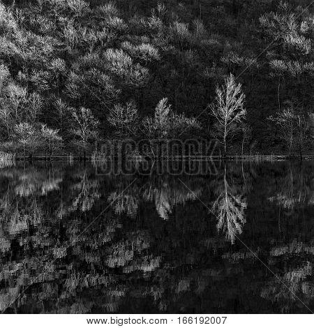 symmetrical reflection of trees in lake monochrome