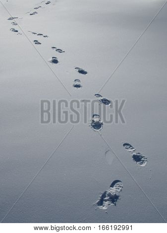 Footprints in the fresh snow shoe track