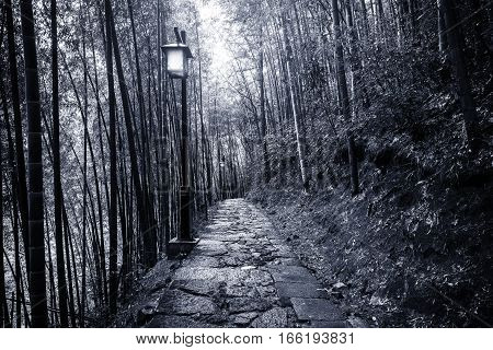 Night view of the path in the bamboo forest in Huangshan National park. China.
