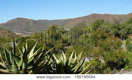 Landscape in the semi desert Little Karoo in the Republic of South Africa, mountains, barren vegetation and blue sky
