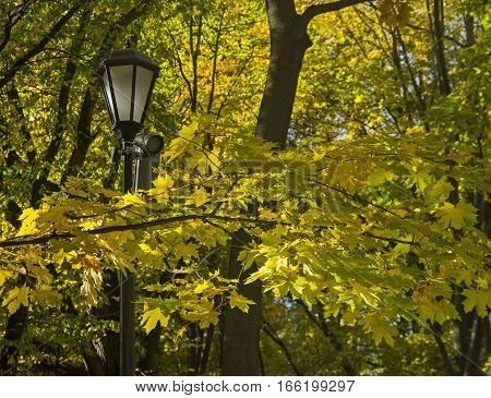 Lantern among the autumn leaves. Beginning of October.