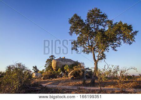 Boulders landscape in Kruger national park, South Africa