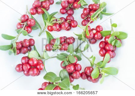 many fresh ripe branches of cranberries or cowberries with leves isolated on white