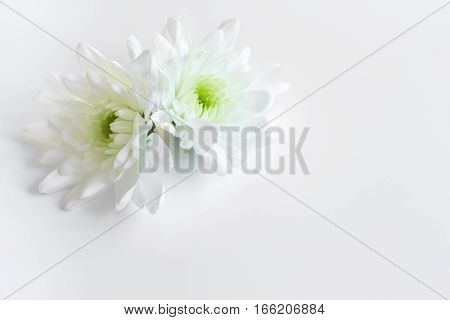 concept of female contraception on white background close up