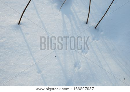 Field mouse trace on snow close up shot