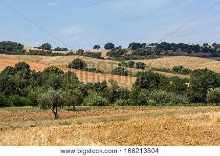 View Of Tuscan Fields And Hills In Maremma Region In Italy