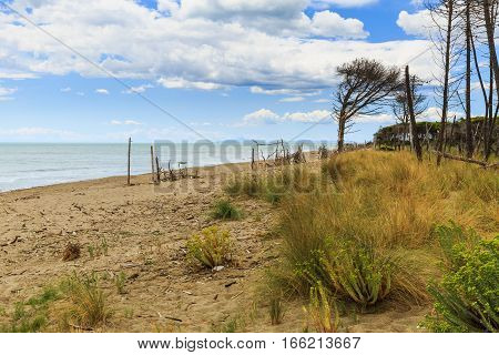 Natural Beach Marina Di Alberese In Toscana In Italy