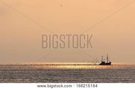 Fishing boat at sunset, accompanied by a bevy of seagulls. Hel, Poland.