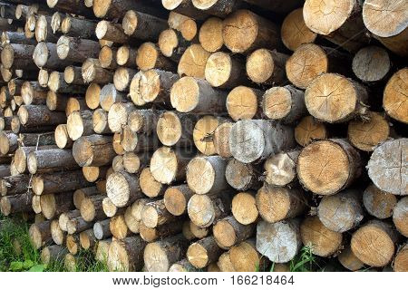 Many sawed pine logs stacked in a pile horizontal view closeup