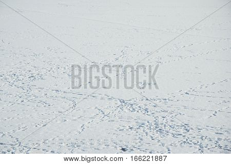 Snow Ground With A Lot Of Bird Trace Photo.