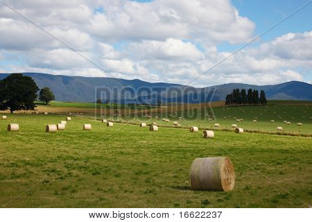 a beautiful landscape of green farm and sky