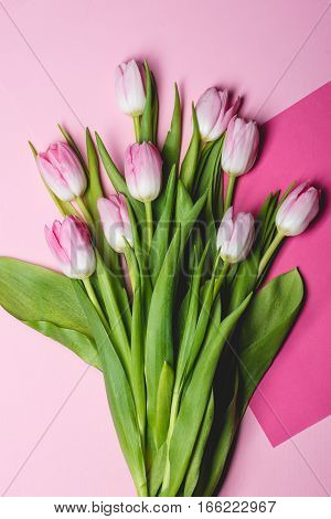 Buquet of pink tulips on pink background
