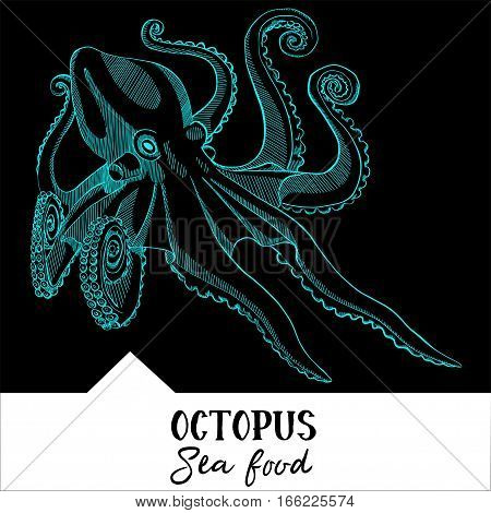 Hand drawn, vector illustration, design for a seafood restaurant menu. The picture shows the octopus on a black background.