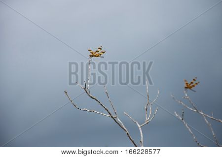 A dragonfly sitting on top of a twig