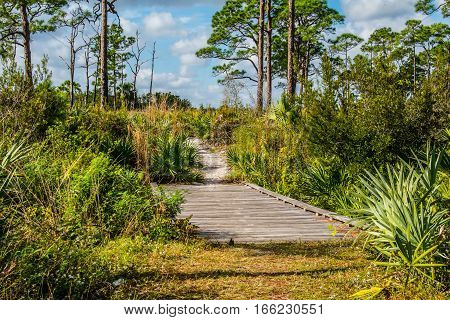 A WOODEN FOOT BRIDGE OVER A STREAM IN A PALMETTO SCRUB