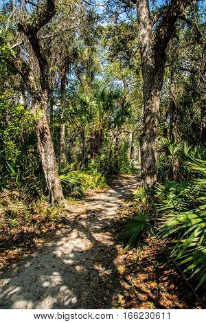 DIRT PATH TO A WOODEN BRIDGE THROUGH THE WOODS WITH OAK  AND PALM TREES WITH SHADOWS