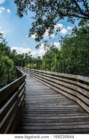A LONG WOODEN WALKWAY BORDERED BY PALM TREES WITH AN OAK TREE LIMB FRAMS AND A BLUE CLOUDY SKY