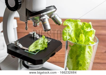 concept healthy food inspection herbs in laboratory close up