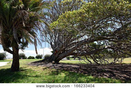 Aboriginal flag sign on the tree. Catani Gardens in St Kilda, Melbourne, Australia.