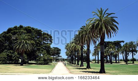 Catani Gardens in St Kilda Melbourne Australia. Beautiful footpath lined with palm trees.