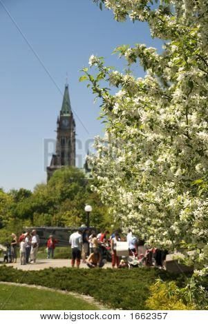 Spring In Ottawa
